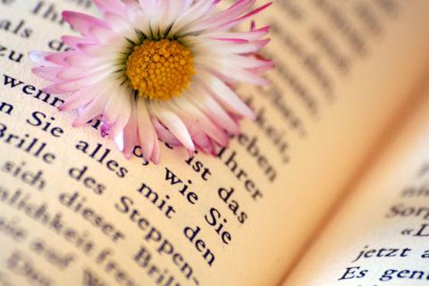 Bücherliebe
